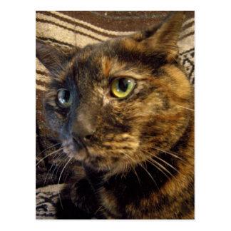 postal bonita del gatito de la cara del risa