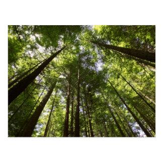 Postal Bosque de la secoya, Rotorua, Nueva Zelanda 2