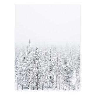 Postal Bosque Nevado