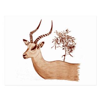 Postal Bosquejo animal del dibujo de la fauna del