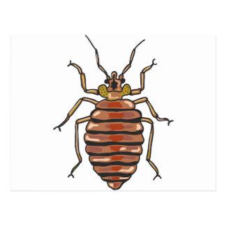 Postal Bosquejo del insecto de cama