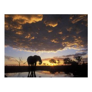 Postal Botswana, parque nacional de Chobe, elefante