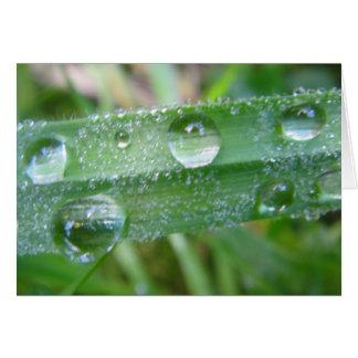 Postal brizna de hierba con Wassertropfen, en blan Tarjeta De Felicitación