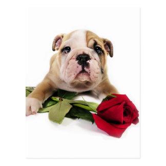 Postal Brown adorable y dogo blanco con la flor roja