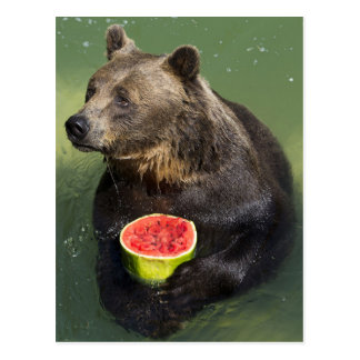 Postal Brown Bear with Water Melon