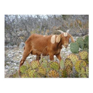 Postal Brown manchó la cabra