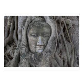 Postal Buda en tree.jpg