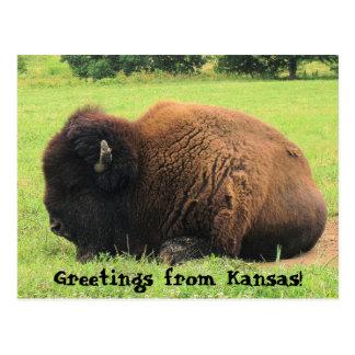 Postal ¡búfalo, saludos de Kansas!
