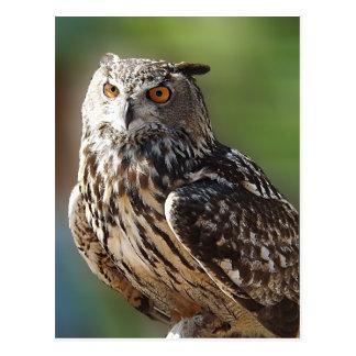 Postal Búho del atontamiento Eagle con los ojos