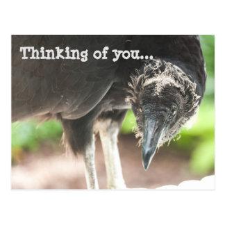 Postal Buitre… que piensa en usted