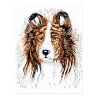 Postal Busto del perro pastor de Sheltie Shetland