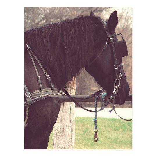 Postal Caballo de Amish
