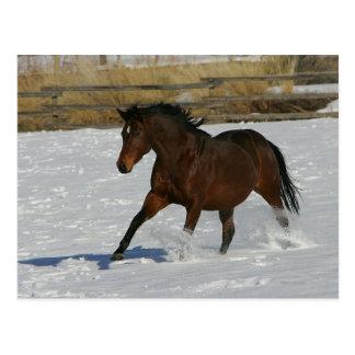 Postal Caballo excelente que corre en la nieve