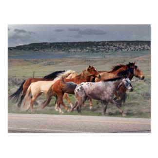 Postal caballo roundup1