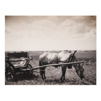 "Postal ""caballo y carro """