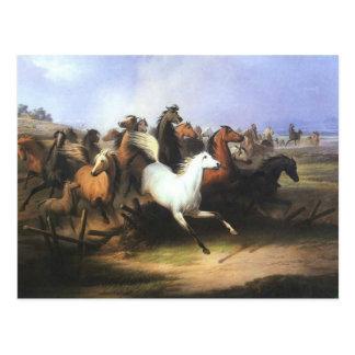 Postal Caballos corrientes del arte clásico