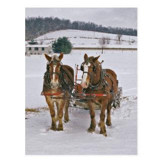 Postal Caballos de proyecto de Amish en Invierno-Postal