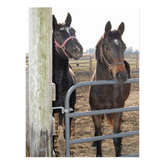 Postal Caballos del sentido de caballo