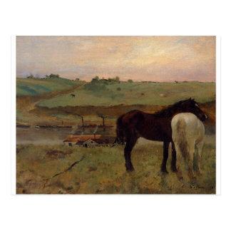 Postal Caballos en un prado de Edgar Degas