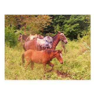 Postal caballos Suramérica