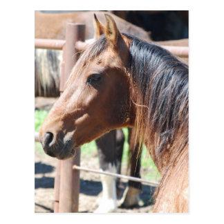 Postal cabeza de caballo marrón