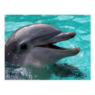 Postal Cabeza del delfín en agua del aquamarine