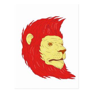 Postal Cabeza del león con el dibujo de la melena que