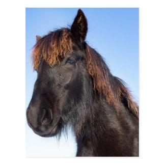 Postal Cabeza del retrato del caballo negro del Frisian