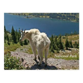 Postal Cabra de montaña en el Parque Nacional Glacier