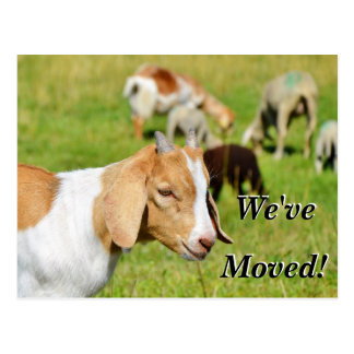 Postal Cabra en un pasto hemos movido la nueva dirección