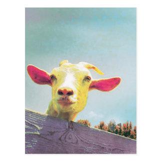 Postal cabra Rosado-espigada