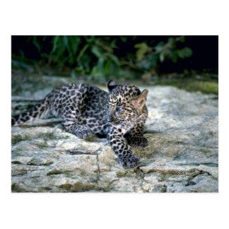 Postal cachorro Leopardo-joven