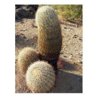 Postal Cactus de barril de mirada aseados encontrados en