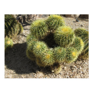 Postal Cactus de barril de oro