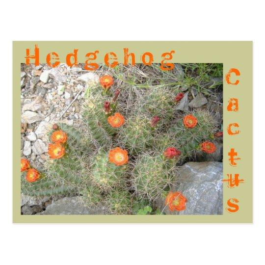 Postal Cactus de erizo