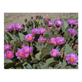 Postal Cactus de la cola del castor