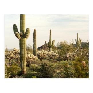 Postal Cactus del Saguaro, Arizona, los E.E.U.U.