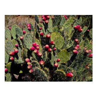 Postal Cactus fructífero del higo chumbo, desierto de