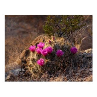 Postal Cactus salvaje en la floración (postal)
