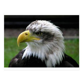 Postal calvo-Eagle