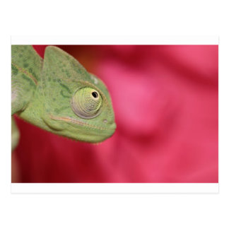 Postal camaleón
