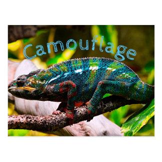 Postal Camaleón colorido