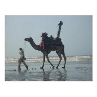 Postal Camel.JPG tribal costero