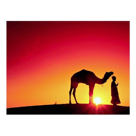 Postal Camello y conductor en la puesta del sol, la India