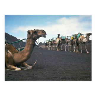 Postal Camellos, Lanzarote