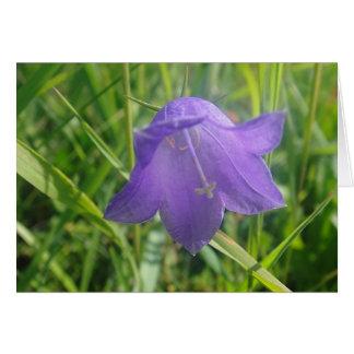 Postal campanilla azul en la hierba, en blanco felicitación