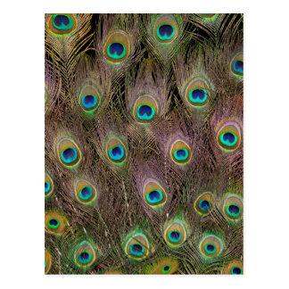 Postal Campo de las plumas del pavo real