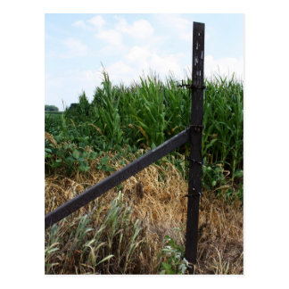 Postal Campo de maíz detrás de la cerca