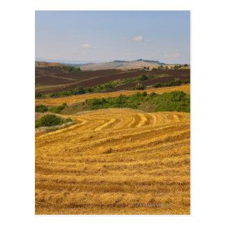 Postal Campos de trigo después de la cosecha