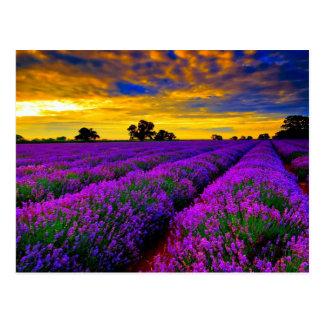 Postal Campos púrpuras